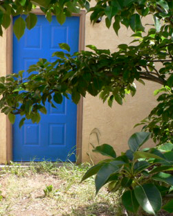 Back door to my garage, with pear tree branch in the foreground