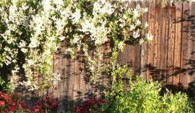 sunshine hits my garden fence all year long