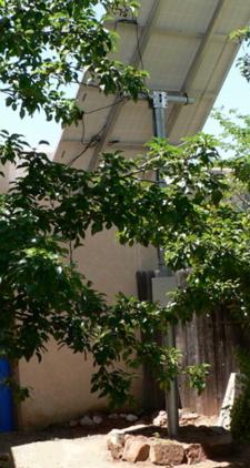 solar-panels-and-pear-tree-225